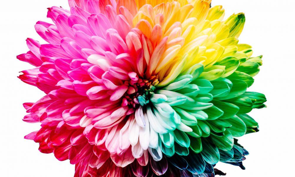 Multicolored flower in full bloom
